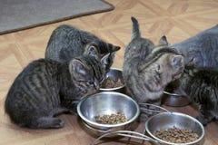 Weinig gestreepte katkatjes Royalty-vrije Stock Afbeelding