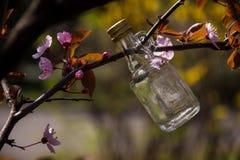 Weinig glasfles die op de boom tussen roze bloemen hangen stock fotografie