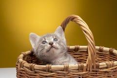 Weinig grappig katje Royalty-vrije Stock Afbeelding