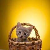 Weinig grappig katje Stock Afbeelding