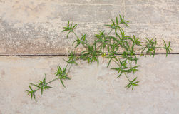 Weinig gras het groeien op de oppervlakte van barstende betonweg royalty-vrije stock foto