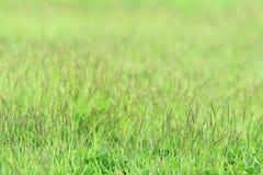 Weinig gras op groene sward Royalty-vrije Stock Foto