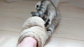 Weinig grijs katjesspel met pantoffels op de vloer stock videobeelden