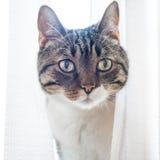 Weinig grijze gestreepte kat Stock Fotografie