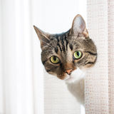 Weinig grijze gestreepte kat Stock Afbeeldingen