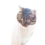 Weinig grijze gestreepte kat Stock Foto's