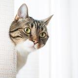 Weinig grijze gestreepte kat Stock Foto