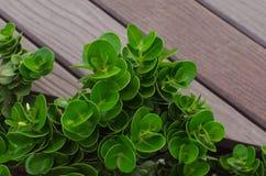 Weinig groene installatie op houten achtergrond Stock Fotografie