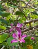 Weinig groene vogel onder bloemen in Thailand Royalty-vrije Stock Afbeelding