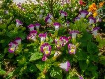 Weinig groep witte en purpere bloemen Stock Foto