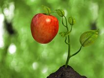 Weinig grote appel Stock Afbeeldingen