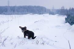 Weinig hond stock fotografie
