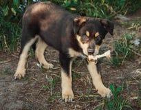 Weinig Hond stock afbeeldingen