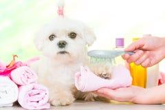Weinig hond bij kuuroord stock afbeeldingen