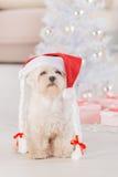 Weinig hond die Santa Claus-hoed dragen Stock Foto