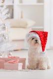 Weinig hond die Santa Claus-hoed dragen Royalty-vrije Stock Foto