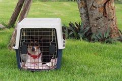 Weinig hond in een doos royalty-vrije stock foto