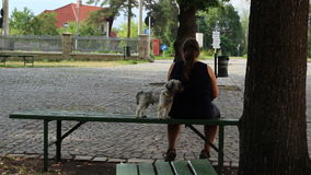 Weinig Hond en Eigenaarzitting stock video