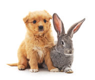 Weinig hond en konijn Stock Foto