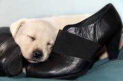 Weinig hond en zwarte schoenen stock afbeelding