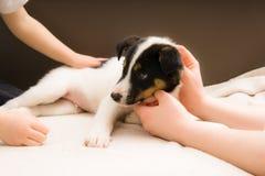 Weinig hond Jack Russell Terrier Royalty-vrije Stock Fotografie