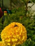 Weinig insect Royalty-vrije Stock Fotografie