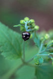 Weinig insect Stock Afbeeldingen