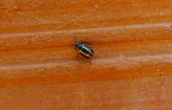 Weinig insect het lopen Stock Foto's