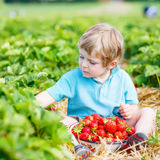 Weinig jong geitjejongen het plukken aardbeien op landbouwbedrijf, in openlucht Royalty-vrije Stock Afbeeldingen