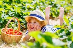 Weinig jong geitjejongen het plukken aardbeien op landbouwbedrijf, in openlucht Royalty-vrije Stock Fotografie