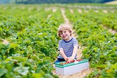 Weinig jong geitjejongen het plukken aardbeien op landbouwbedrijf, in openlucht Stock Foto's