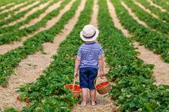 Weinig jong geitjejongen het plukken aardbeien op organisch biolandbouwbedrijf, in openlucht stock afbeeldingen