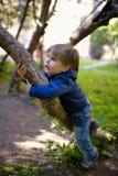 Weinig jongen beklimt omhoog op boom Stock Afbeeldingen