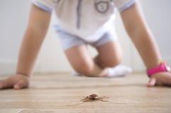 Weinig jongen dicht bij kakkerlak op de huisvloer royalty-vrije stock afbeeldingen