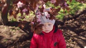 Weinig jongen dichtbij de bloeiende boom in de lentetijd stock footage