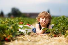 Weinig jongen die en aardbeien op bes plukken eten bewerkt Stock Afbeelding