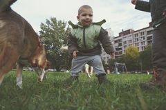 Weinig jongen die en met hond op gras spelen lopen Royalty-vrije Stock Fotografie