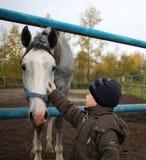 Weinig jongen die het gezicht van een grijs paard op het landbouwbedrijf strijken royalty-vrije stock fotografie