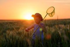 Weinig jongen die insecten vangen bij zonsondergang stock foto's