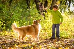 Weinig jongen die met colliehond spelen op het de herfstbos royalty-vrije stock foto