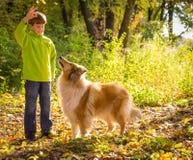 Weinig jongen die met colliehond spelen op het de herfstbos stock afbeeldingen