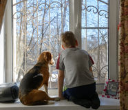 Weinig jongen die met zijn hond door het venster kijken royalty-vrije stock afbeeldingen