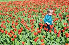 Weinig jongen die op tulpengebieden lopen Stock Fotografie
