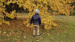 Weinig jongen die pret hebben en in de herfstpark springen stock videobeelden