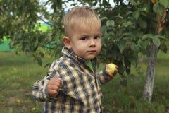 Weinig jongen die rode appel in boomgaard eten stock afbeelding