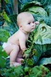 Weinig jongen die in tuin speelt Royalty-vrije Stock Afbeeldingen