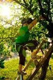 Weinig jongen in een boomgaard Stock Afbeelding