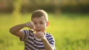 Weinig jongen in een gestreepte T-shirt die een paardebloem blazen De lente, zonnig weer stock video