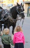 weinig jongen en meisje die een zwart paard bekijken royalty-vrije stock foto