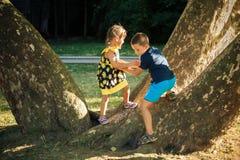 Weinig jongen en meisjesbroer en zuster spelen in park op reusachtige boom Royalty-vrije Stock Fotografie